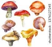 Watercolor Illustration  Image...