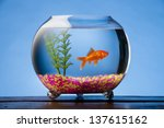 Goldfish In A Beautiful Round...