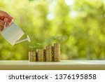 Small photo of Fund investment / portfolio management for long term sustainable growth concept : Investor pours water from watering can, sprout on rows of rising coins, depicts money gain from financial investment.