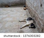 a landscape of naps of stray... | Shutterstock . vector #1376303282