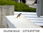 a sign of hybridization is the ... | Shutterstock . vector #1376345768
