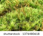 green  moss ground cover in a...   Shutterstock . vector #1376480618