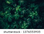 foliage of tropical leaf in...   Shutterstock . vector #1376553935