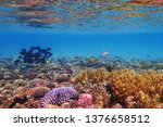 coral reef in egypt as nice... | Shutterstock . vector #1376658512