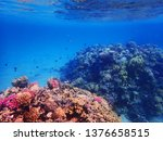 coral reef in egypt as nice... | Shutterstock . vector #1376658515