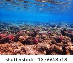 coral reef in egypt as nice... | Shutterstock . vector #1376658518