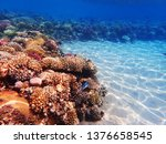 coral reef in egypt as nice... | Shutterstock . vector #1376658545