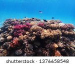 coral reef in egypt as nice... | Shutterstock . vector #1376658548