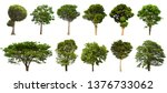 Stock photo isolated tree set located on a white background large images are suitable for all types of work 1376733062