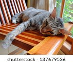 Cat Lying At Home On A Wooden...