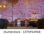 beautiful pink sakura cherry... | Shutterstock . vector #1376916968