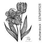 engraved illustration of tulip... | Shutterstock .eps vector #1376939525