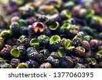 green peppers on a white... | Shutterstock . vector #1377060395