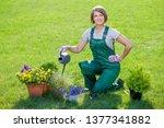 gardener or florist at work....   Shutterstock . vector #1377341882