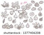 set of sketch fig slices  fig... | Shutterstock .eps vector #1377406208