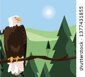 beautiful bald eagle in tree... | Shutterstock .eps vector #1377431855