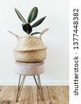 home plant ficus elastica... | Shutterstock . vector #1377448382
