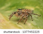 Jumping spider on nature
