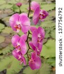 beauty orchid | Shutterstock . vector #137756792