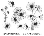vector drawing daisy flower ... | Shutterstock .eps vector #1377589598