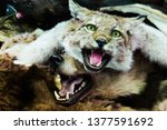 stuffed lynx and bear. stuffed... | Shutterstock . vector #1377591692