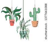 houseplants on macrame hangers... | Shutterstock .eps vector #1377661088