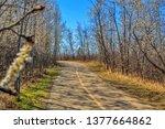 bright springtime pathway  | Shutterstock . vector #1377664862