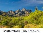 Saguaro Cactus  A Birding Trai...