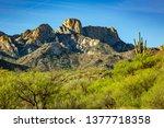 Saguaro Cactus And The Santa...