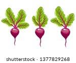 fresh beet vector design... | Shutterstock .eps vector #1377829268