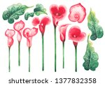 watercolor leaves and calla...   Shutterstock . vector #1377832358