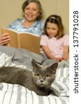 Stock photo senior woman and granddaughter reading lying in bed with cat 137791028