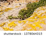 succulents grow on scanty stony ... | Shutterstock . vector #1378064315