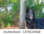 summer portrait of black...   Shutterstock . vector #1378124468