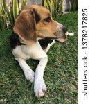 puppy facing left | Shutterstock . vector #1378217825