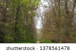 a footpath through the woodland ... | Shutterstock . vector #1378561478