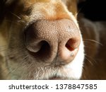dog with brown snout   close up ...   Shutterstock . vector #1378847585