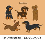 Various Poses Of Dachshunds....
