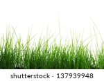 green grass isolated on white... | Shutterstock . vector #137939948