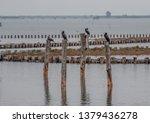 Cormorants In The Lagoon
