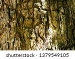 bark tree texture | Shutterstock . vector #1379549105
