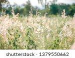vintage retro flowers background | Shutterstock . vector #1379550662