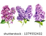 Set Of Lilac Flowers On White...