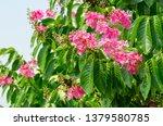 lagerstroemia speciosa at... | Shutterstock . vector #1379580785