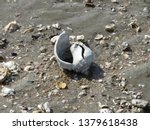 broken sea shell on a muddy... | Shutterstock . vector #1379618438