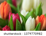 tulip flower close up  with... | Shutterstock . vector #1379770982