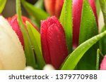 tulip flower close up  with... | Shutterstock . vector #1379770988