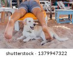 cute white dog relaxing on... | Shutterstock . vector #1379947322