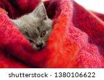 Stock photo gray kitten sleeps in a bright wool blanket 1380106622