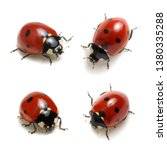 collection of ladybugs isolated ...   Shutterstock . vector #1380335288